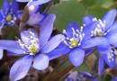 Millal kinkida lilli Eesti naisele?