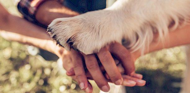 Kohtle oma lemmiklooma nagu võrdväärset pereliiget